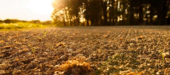 Vers de terre, collemboles, cloportes : les victimes souterraines des pesticides